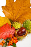 Composition of autumn chestnuts and leaves Royalty Free Stock Photos