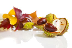 Composition of autumn chestnuts and leaves Royalty Free Stock Images
