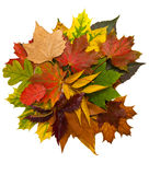 Composition of autumn chestnuts and leaves Royalty Free Stock Image