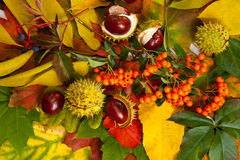 Composition of autumn chestnuts and leaves Stock Image