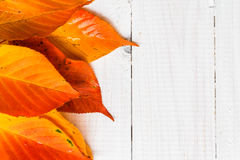Composition autumn fiery orange leaves white boards Stock Photography
