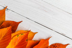 Composition autumn fiery orange leaves white boards Stock Images