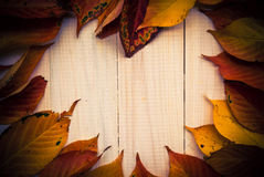 Composition autumn fiery orange leaves white boards Stock Image