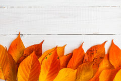 Composition autumn fiery orange leaves white boards Royalty Free Stock Image