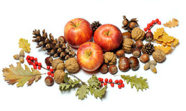 Composition of autumn fruits Royalty Free Stock Photo