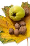 Quince and walnuts lie on a large maple leaf. Composition with autumn fruits. Quince and whole walnuts in shell Royalty Free Stock Photography