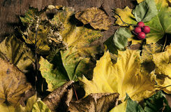 Composition of autumn leaves Royalty Free Stock Photo