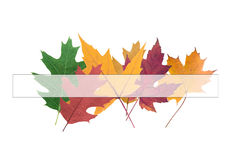 Composition of  autumn leaves Royalty Free Stock Image