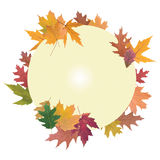 Composition of autumn leaves Stock Photography