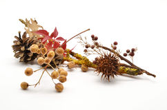 Composition of autumn leaves and fruits Royalty Free Stock Photography