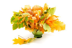 Composition of autumn leaves. On white background Royalty Free Stock Images