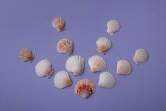 Composition avec des coquilles de mer Image libre de droits