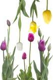 Composition avec des orchidées blanches et une bougie verte Images stock