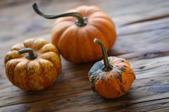 Composition avec des potirons de Halloween image libre de droits