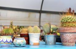 Composition avec des succulents et le catcus Photo libre de droits