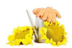 Composition avec des tournesols et des outils de jardinage d'isolement sur le blanc Photographie stock