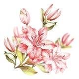 Composition avec les lis de floraison Illustration d'aquarelle d'aspiration de main Photographie stock libre de droits