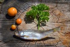 Composition avec les poissons secs Photo libre de droits