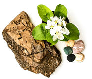 Composition of the bark of eucalyptus, Apple flowers, stones and shells Stock Photo
