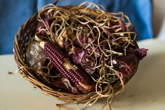 Composition of a basket filled with withered flowers and corn Stock Images