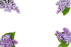 Composition of beautiful lilac flowers Stock Image