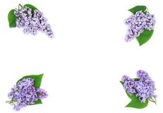Composition of beautiful lilac flowers Royalty Free Stock Photos