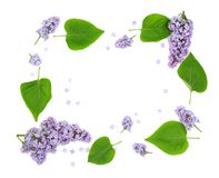 Composition of beautiful lilac flowers Stock Photography