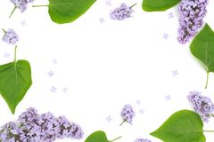 Composition of beautiful lilac flowers Stock Photos