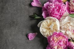 Composition with beautiful peony flowers. On grey textured background, closeup Stock Image