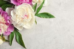 Composition with beautiful peony flowers. On light textured background, closeup Stock Image