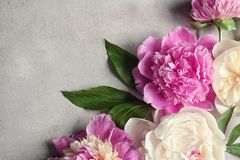 Composition with beautiful peony flowers. On light textured background, closeup Royalty Free Stock Photo