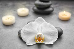Composition with beautiful white orchid with stones. On grey background Royalty Free Stock Photo