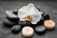 Composition with beautiful white orchid and stones. On grey background Royalty Free Stock Photo