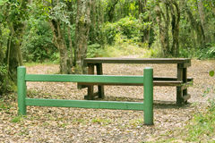 Composition with bench in green light forest Royalty Free Stock Image