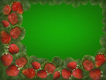 Strawberry on a green background Stock Photography