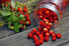 Composition with berries of wild strawberry Stock Photo