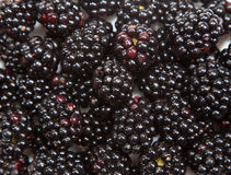 Composition of black raspberries Royalty Free Stock Images