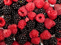 Composition of black and red raspberries Royalty Free Stock Photo
