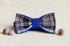 Composition : Bleu à carreaux exagéré avec un noeud papillon noir, coquilles des escargots sur un fond beige Photos libres de droits