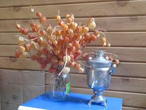 Flowers physalis and samovar royalty free stock image