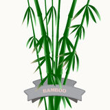 The composition of the branches of bamboo Stock Photos