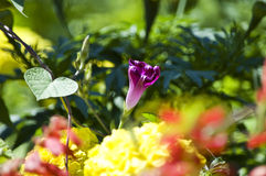 Composition of bright garden flowers Royalty Free Stock Image
