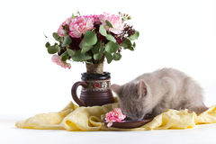 Composition of a cat and flowers Stock Image