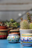 Composition with catcus and coloured pots Stock Image