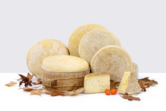Composition of cheeses on white table with autumn leaves Stock Photography