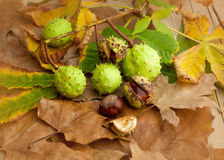 Composition of chestnuts Stock Photography