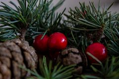 Composition of Christmas pinecone, branches of Hollies on green wooden background. royalty free stock photography