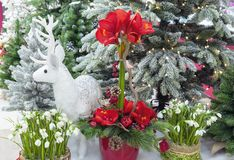 Composition with Christmas trees, flowers and white deer royalty free stock image