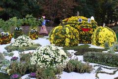 Composition of Chrysanthemum Stock Photos