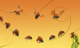 Composition of a cloud of ladybirds on a orange gradient Stock Images